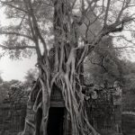 ROOTED PASSAGE