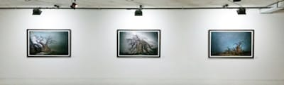 Zott's Art Space